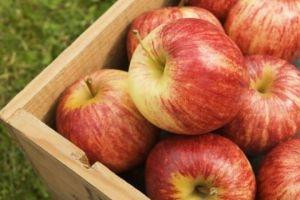 سورية توقع عقداً لتصدير 500 ألف طن من التفاح إلى مصر والعراق