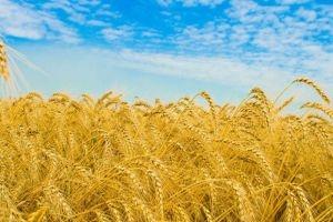 التعديل يصيب الخطة الزراعية ثلاث مرات