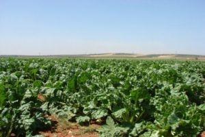غرف الزراعة: سياسة التسعير الحكومية للمنتجات الزراعية تهدد الأمن الغذائي