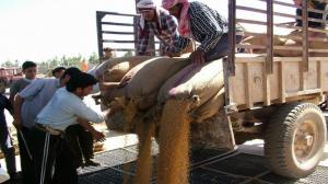 صحيفة محلية: هل يربح مستورد القمح... أكثر من 90 مليار ليرة في سنتين؟!