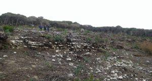 البحث عن الدفء يقضي على معظم الغابات في طرطوس