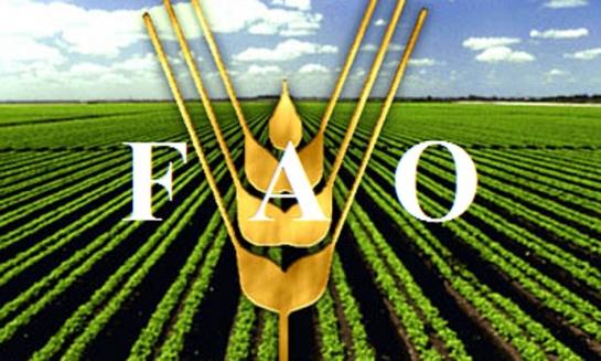 الفاو: تراجع أسعار الغذاء العالمية لأدنى مستوياتها منذ 5 أشهر