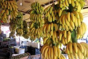 قرار بالسماح باستيراد الموز لمدة 7 أشهر