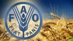منظمة الفاو: أسعار الغذاء العالمية ترتفع لأول مرة في 2020