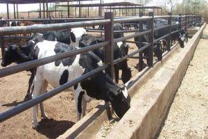 الزراعة تمنح قروض بنحو 28 مليون ليرة لدعم الثروة الحيوانية
