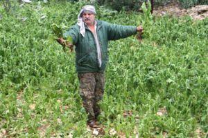 تعويض المزارعين عن خسائر محاصيلهم بـ 1000 ليرة عن كل دونم!