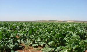 سورية تبدأ بمراجعة المواصفات الخاصة للمنتجات الزراعية