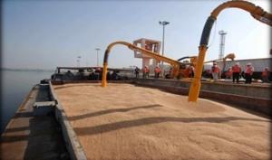 سورية تستورد 13 ألف طن من القمح الطري خلال شهر