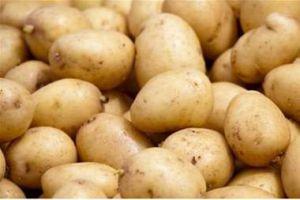 توصية اقتصادية بعدم استيراد البطاطا لوجود كميات تغطي حاجة الأسواق