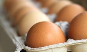 مؤسسة الدواجن: ارتفاع أسعار البيض والفروج سببه زيادة أسعار المواد العلفية