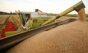 تخصيص 550 مليون ليرة  لحبوب حماة