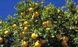 غرف الزراعة تعد إستراتيجية جديدة لتسويق المنتج الزراعي