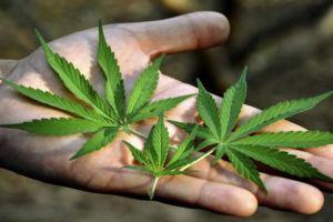 ضبط أشجار للمخدرات بريف طرطوس!