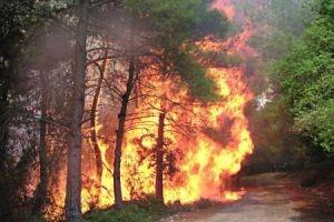 نشوب 200 حريق في غابات سورية منذ بداية 2016