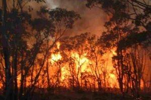 في طرطوس فقط..100 حريق خلال أسبوع و810 حرائق في أقل من عام!!