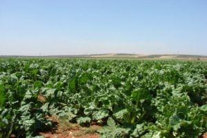 روسيا تساهم بتحسين البيئة الزراعية في سورية وتطوير الإنتاج الزراعي
