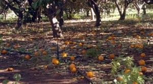 أكثر من 220 مليار ليرة خسائر قطاع الزراعة في سورية