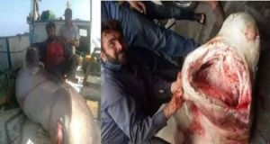ظهور أسماك قرش في الساحل السوري فهل هي مؤذية؟