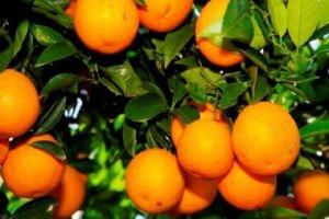 وزارة النقل: تخفيض بدلات المنتجات الزراعية المصدرة 75% قريباً