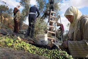 القطاع الزراعي في سورية..خطط على الورق جيدة والعلة في التطبيق