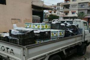 ضبط طن من الموز المهرب في طرطوس