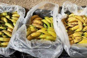 ضبط 575 كليو غرام من الموز المهرَّب في اللاذقية