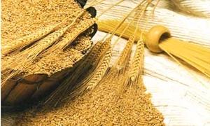 تراجع صادرات القمح الفرنسية إلى 3.3 مليون طن بنسبة 26% فى الربع الثالث