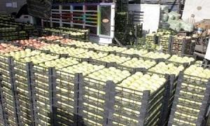 نحو 300 ألف طن إنتاج سورية من التفاح