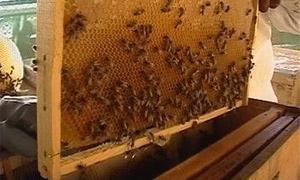 289 طناً إنتاج طرطوس من العسل