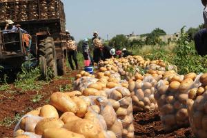 كيلو البطاطا تصل لثلاث آلالاف ليرة سورية في أسواق دمشق.. و تجار يؤكدون ( الخير لقدام )