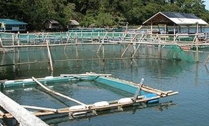 سورية تبدأ باختبارات بحثية لإنتاج أسماك