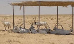 البيئة تصدر قرار بشروط ومواصفات حدائق تربية الحيوانات البرية والأقفاص والمسيجات