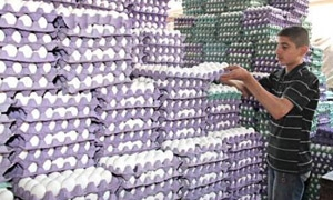 تراجع تربية الطيوربنسبة 70% ..و دواجن حماة تؤمن 54 ألف بيضة يومياً