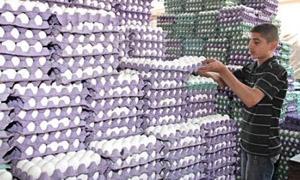 أسعار الفروج والبيض تعود إلى الارتفاع مجدداً في أسواق دمشق
