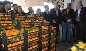 200 ألف طن رسمياً فقط !! .. 600 ألف طن إجمالي صادرات سورية من الحمضيات والحصة الأكبر للعراق