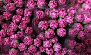 15 مليون دولار إجمالي صادرات سورية من الزهور خلال العام 2014