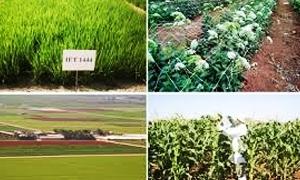 التوصل إلى زراعة 43 صنفاً من محاصيل القمح والشعير والبطاطا تتحمل الجفاف