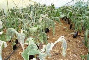 الزراعة: تعويض نحو 77 ألف متضرر بقيمة 1.5 مليار ليرة نتيجة الكوارث الطبيعية في 2015