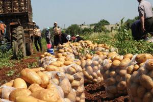 اتحاد الفلاحيين يشيد بقرارإيقاف تصدير البطاطا ويعلل ذلك بنقص الإنتاج الحالي
