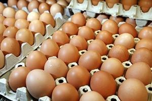 نحو 150 مليون بيضة إنتاج مؤسسة الدواجن منذ بداية العام الحالي