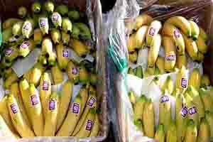 خلال يومين فقط.. تنظيم 80 ضبط تمويني بحق بائعي الموز في أسواق دمشق