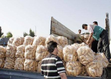51.4 ألف طن الإنتاج المتوقع من البطاطا في طرطوس