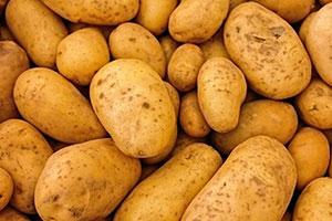 بالتفصيل: هكذا إستوردت المؤسسة السورية للتجارة مادة البطاطا!!