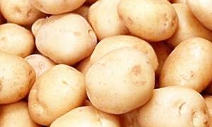 توقيع عقد لاستيراد 3 آلاف طن من البطاطا المصرية وبيعها بسعر التكلفة