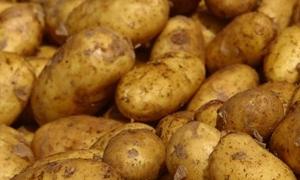 مرسوم بإعفاء حنطة القمح والبطاطا المستوردة من
