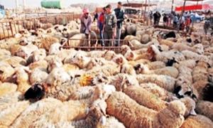 وزارة الزراعة:الأعداد الإجمالية للأغنام في سورية يتجاوز 18 مليون راس