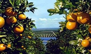 اتحاد المصدرين يقترح تصدير الحمضيات دون وسطاء