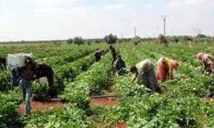 صندوق الدعم الزراعي بالسويداء يدعم مزارعيه بـ 417 مليون ليرة