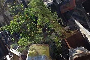 محافظة دمشق تزيل بسطات المزة شيخ سعد وكراج الست وشارع الثورة