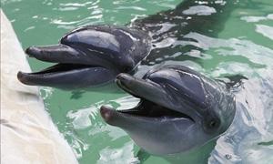 الدلافين تنادي بعضها بالأسماء